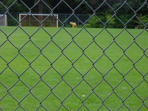 足球场围网 (2)